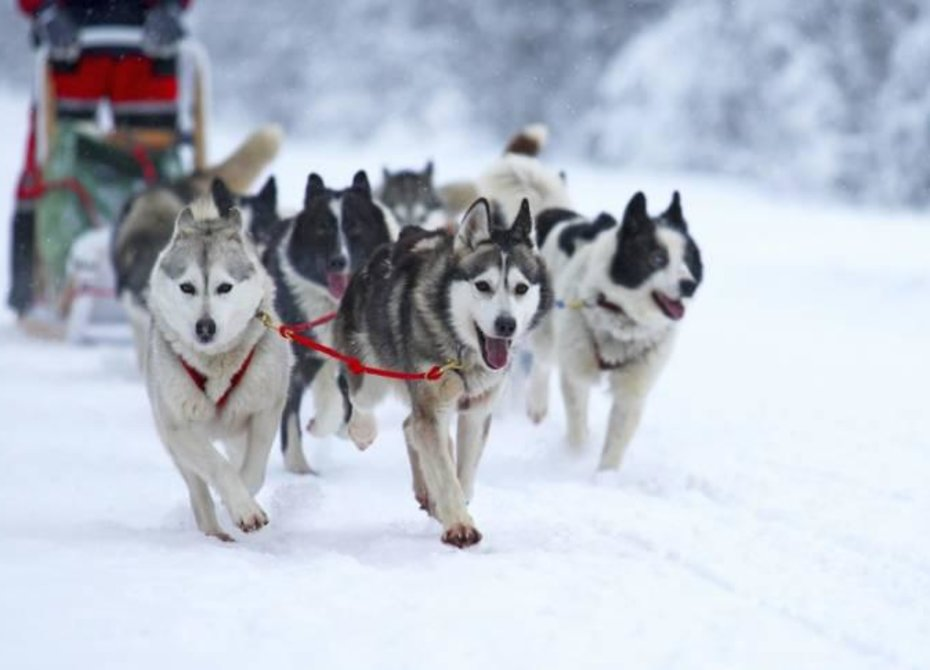 Камчатские морпехи поучаствуют в гонке на собачьих упряжках