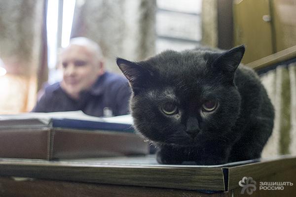 http://defendingrussia.ru/upload/images/ckeditor/552d23ccca246.jpg